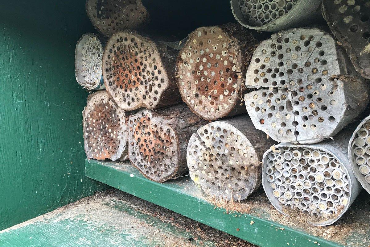 Mason Bees Biodynamic Farming Pollinators